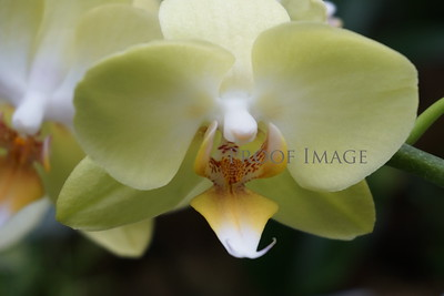 The beauty of orchids.