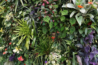 Wall of plants.