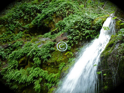 What makes it home near a rushing waterfall?