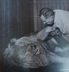 Bill The Lion