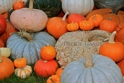 The Season of Fall Begins