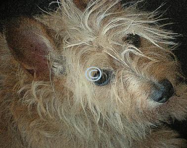 * Daisy Mae - My Dear friends little dog.