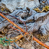 Guadalupe Mountains- Smith Springs Roots