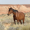 Wild Horse of the Southwest