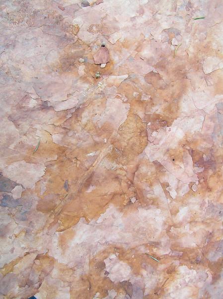 Tapestry of Leaf Imprints