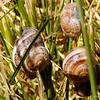 snail in triplicate