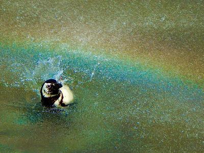 swimming in rainbows 1