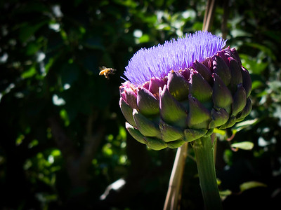 bee and thistle
