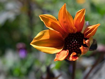 opening to orange