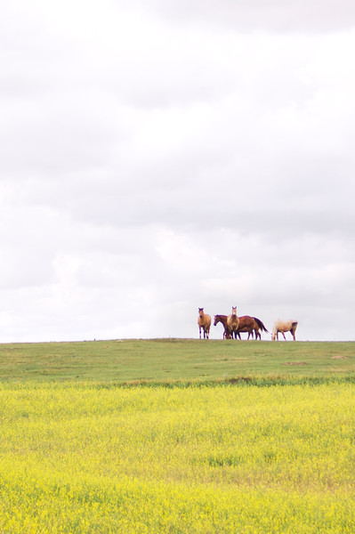 """Roaming in the Prairies""<br /> Southern Alberta, Canada<br /> August 2015"