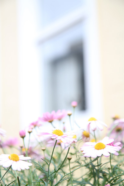 """Window Daisies""<br /> Bergen, Norway<br /> June 2014"