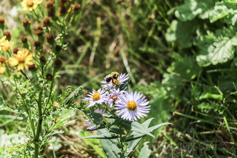 Wildflowers grow in meadows of the beautiful PEI countryside