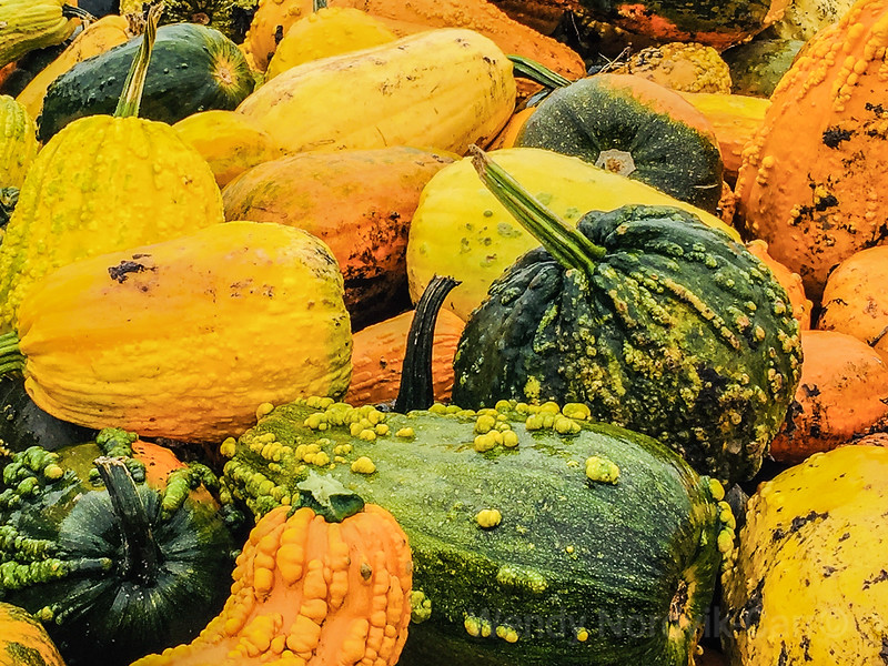 Colorful fall harvest