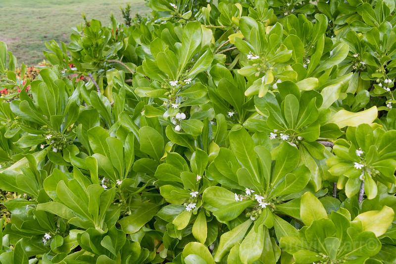 Tropical plants of Caribbean Island  Curaçao