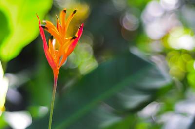 Parrot Blume