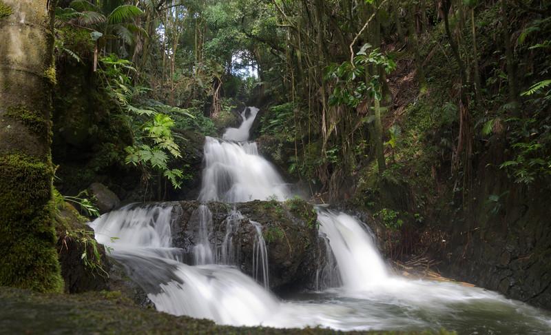 Botanical Falls