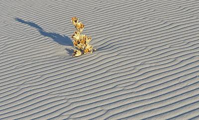 Burried Yucca