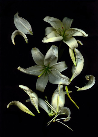 Lilly Study 3 7