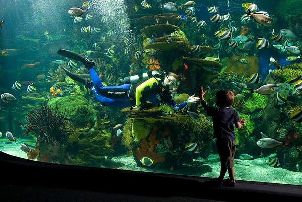 Rainbow Rock at Ripley's Aquarium, Myrtle Beach