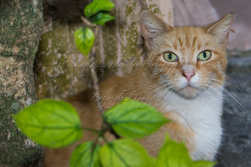 """Neighborhood Cat: """"Who are you and what do you want?"""" (Day 124/366)"""