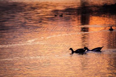 Golden Hour Swim (Day 66/366)