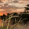 Sunset Frills (Day 208/366)