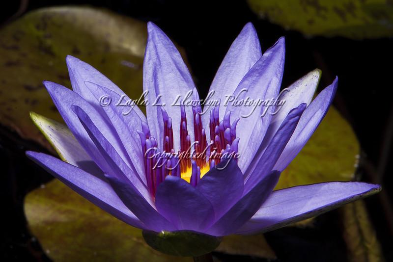 Day 117 Her Purple Majesty