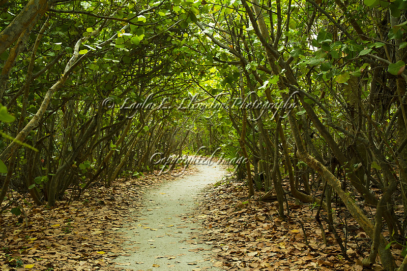 Day 208  Path to Discovery