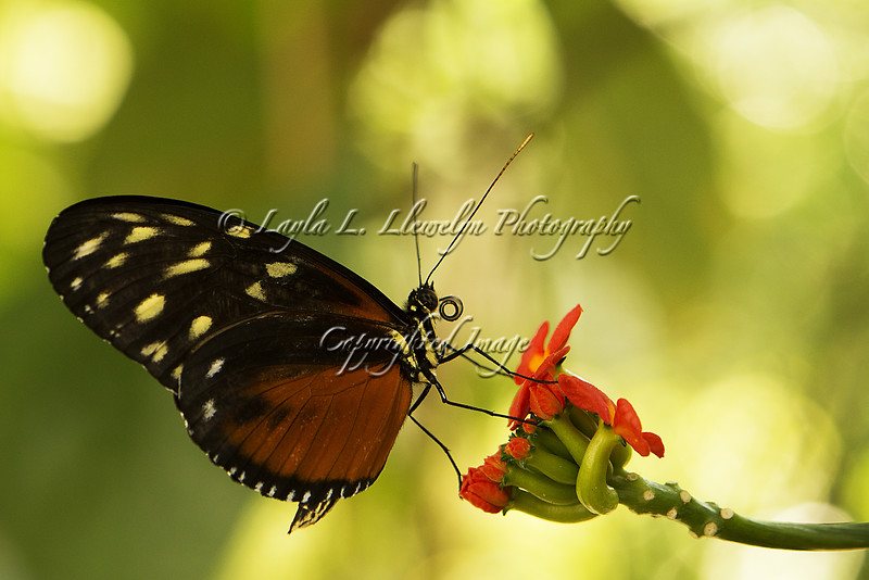 "Day 184  ""The butterfly is a flying flower. The flower a tethered butterfly.""<br /> --Ponce Denis Écouchard Lebrun"