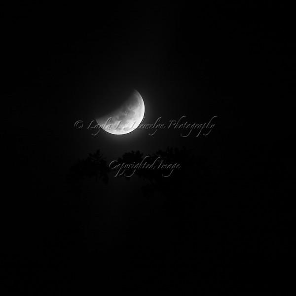 Day 261 Lunar Eclipse (October 8, 2014)