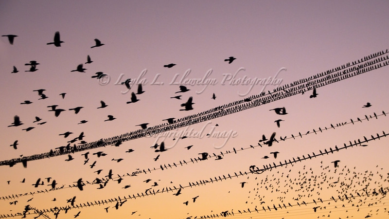 Day 297 Coming Home to Roost (Photo 1 of 2)