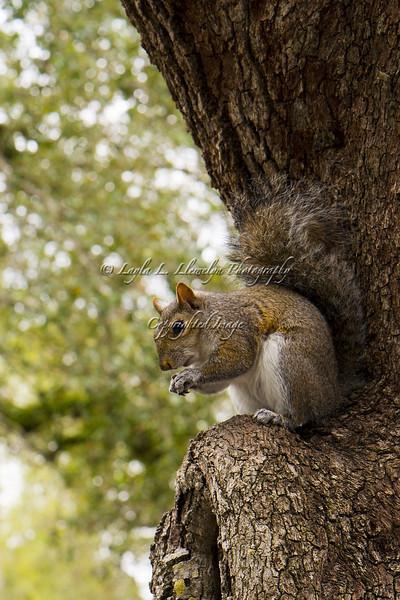 Day 36 (Photo 1) Munching squirrel #1