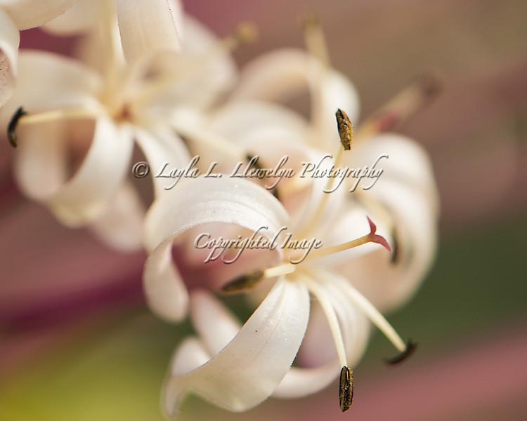Day 11 Mini white blooms