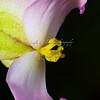 Day 55 Begonia Macro