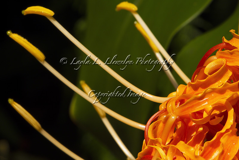 Day 110 Flowering Oddities