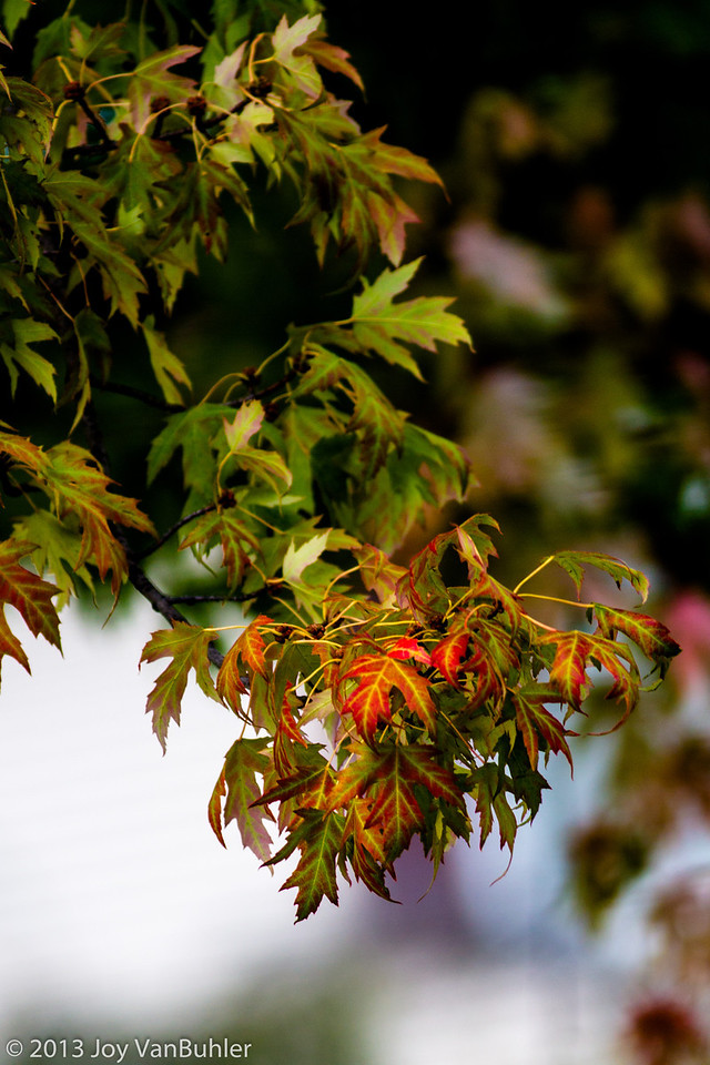 276/365 - Fall Colors
