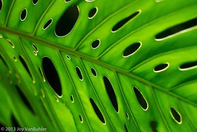 2/365 - Matthaei Botanical Gardens
