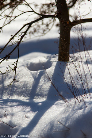4/365 - Snow and shadows