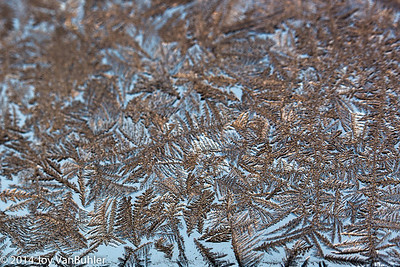 3/365 - Ice Crystals