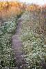 273/365 - Path