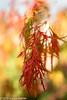 271/365 - Fall Colors