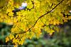 282/365 - Fall Colors