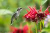 206/365 - Hummingbird