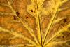 272/365 - Leaf