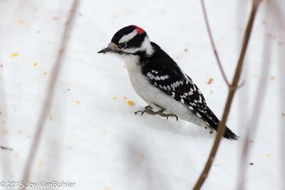 39/365 - Woodpecker