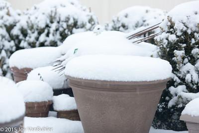 12/365 -Snow