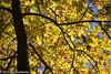 284/365 - Fall Color at Kensington