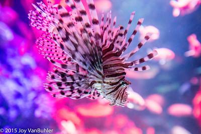 45/365 - Michigan SeaLife Aquarium