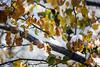 326/365 - Snow