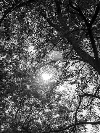 219/365 - Trees